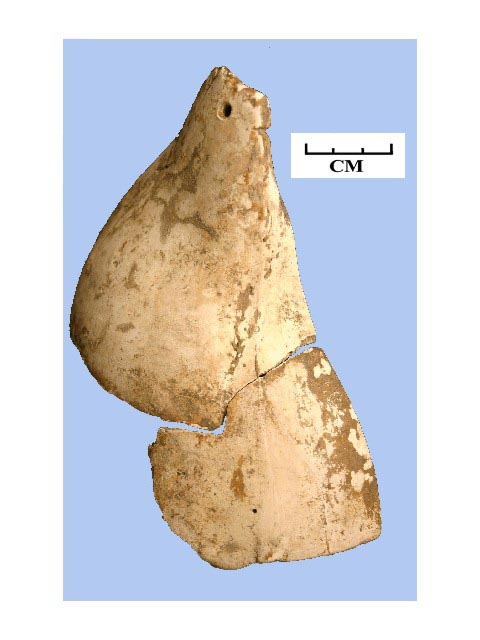 Figure 8: Reassembled fragments of Lightning whelk shell pendant found in BF 05-02.